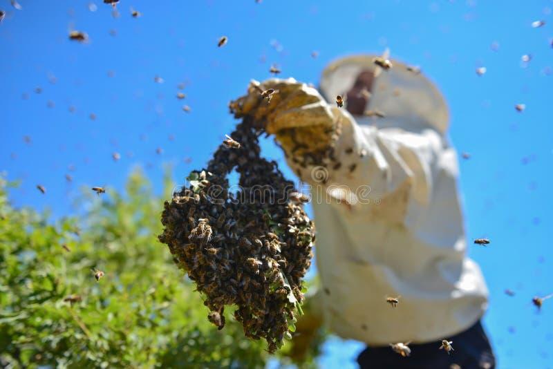 Agressieve bijen en de bijenkolonie stock afbeelding