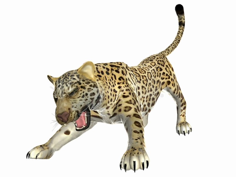Agressive Jaguar royalty free stock images