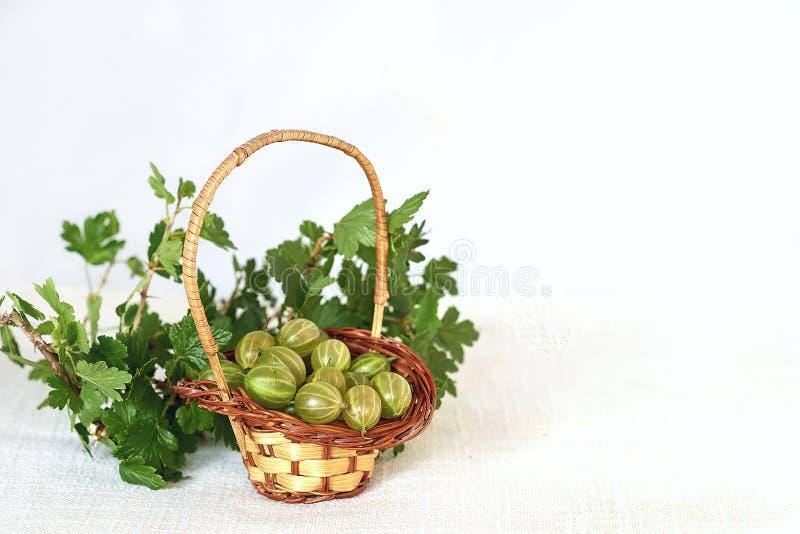 Agresty w łozinowym koszu i gałązce z zielonymi liśćmi zdjęcia stock