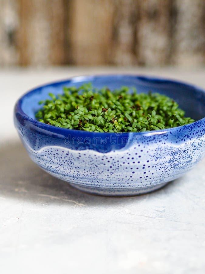 Agrião de jardim na bacia azul fotografia de stock royalty free