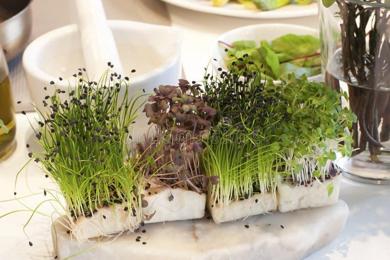 Agrião verde fresco foto de stock royalty free