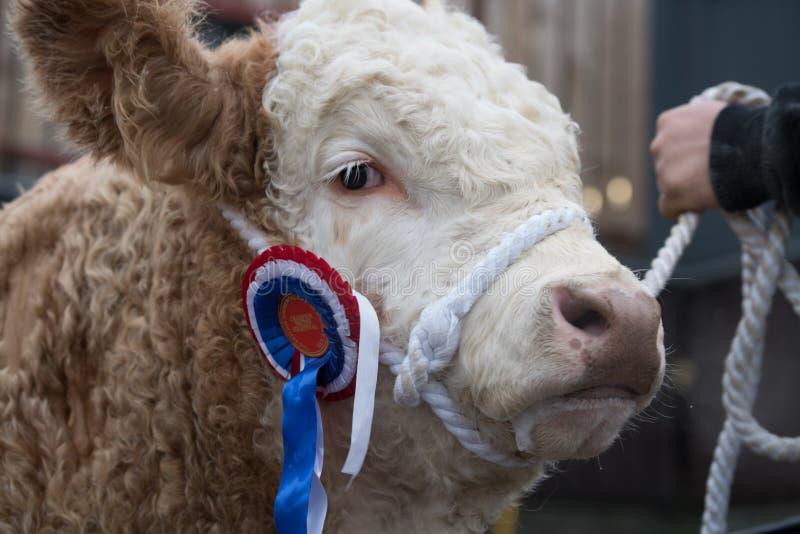 Agri Expo 2017, Groot-Brittannië stock fotografie
