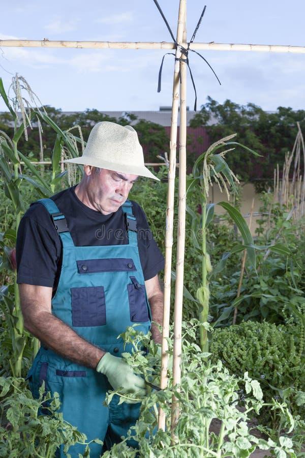 Agricoltore al suo frutteto fotografia stock libera da diritti