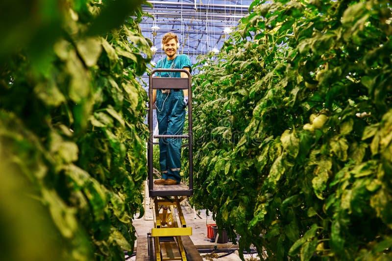 Agricoltore amichevole che lavora alla piattaforma idraulica dell'elevatore a forbice in serra fotografia stock