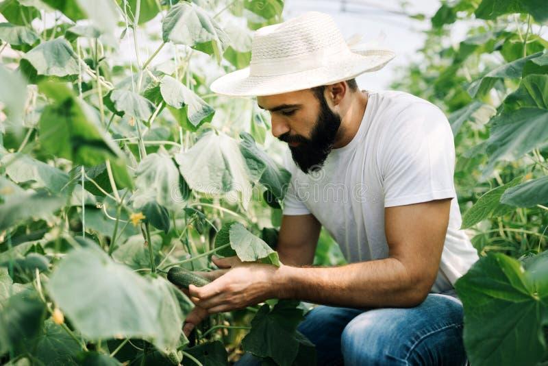 Agricoltore amichevole sul lavoro in serra fotografia stock