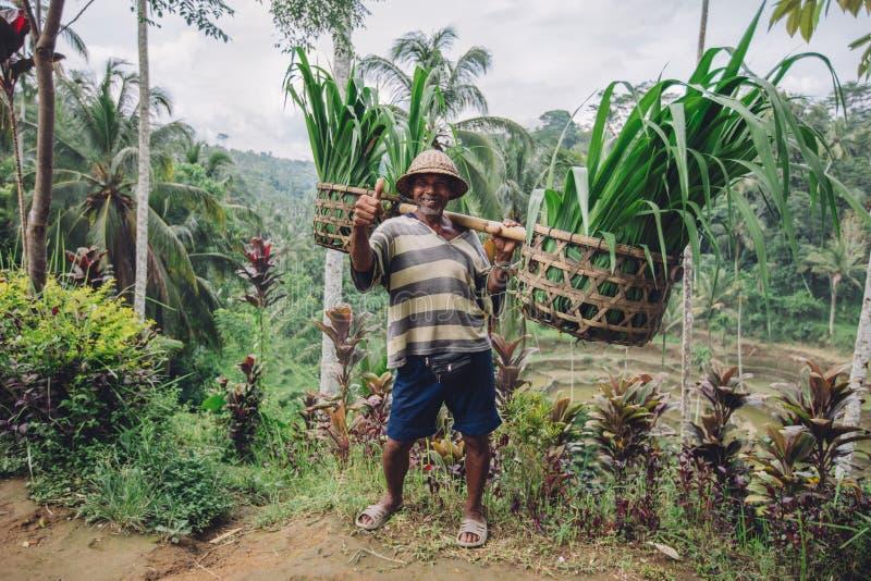 Agricoltore anziano che porta un giogo sulle sue spalle immagine stock libera da diritti