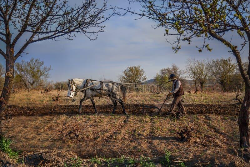 Agricoltore che ara il campo con il suo cavallo bianco fuori della città di Nevsehir, in Turchia fotografia stock