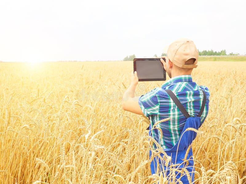 Agricoltore che fotografa la pianta del grano nel campo, usando alla compressa Wh fotografia stock libera da diritti