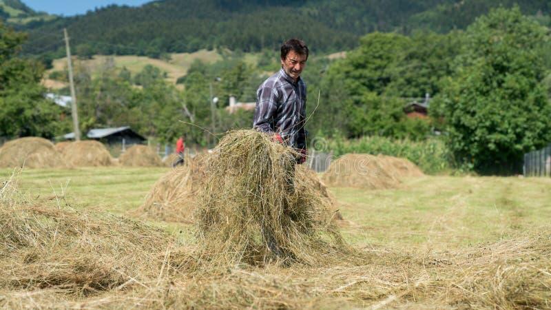 Agricoltore che lavora con i mucchi di paglia nell'azienda agricola aperta del campo, Artvin, Turchia fotografia stock libera da diritti