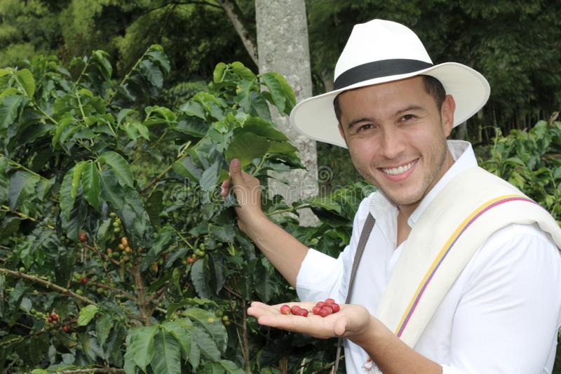 Agricoltore che mostra i chicchi di caffè crudi fotografia stock libera da diritti