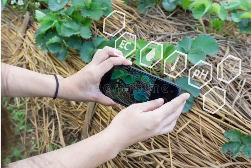 Agricoltore che per mezzo dello smartphone che controlla temperatura, umidità, suolo pH con sullo schermo olografico digitale nel fotografia stock libera da diritti