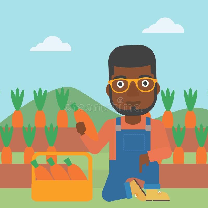 Agricoltore che raccoglie le carote illustrazione di stock