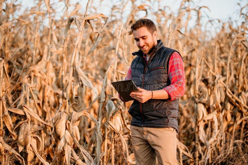 Agricoltore che sorride e che gode della raccolta giovane agricoltore che usando tecnologia e raccogliendo cereale fotografie stock