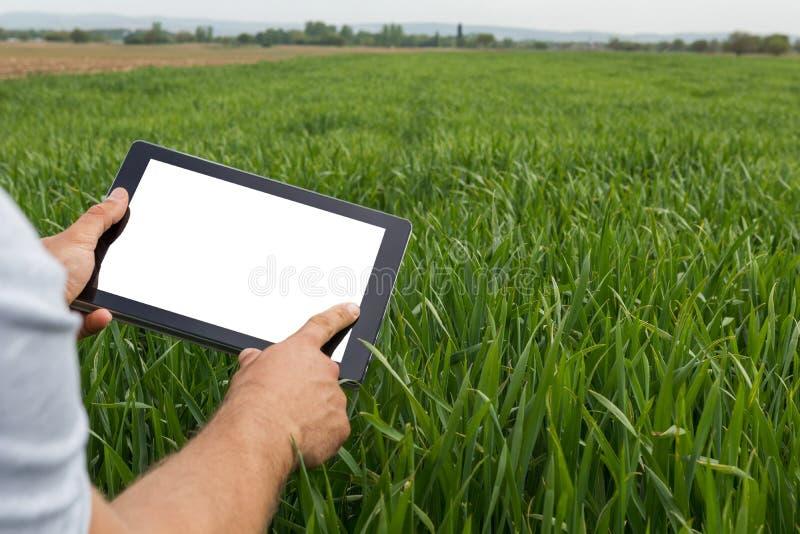 Agricoltore che utilizza il computer della compressa nel giacimento di grano verde Schermo bianco fotografia stock libera da diritti