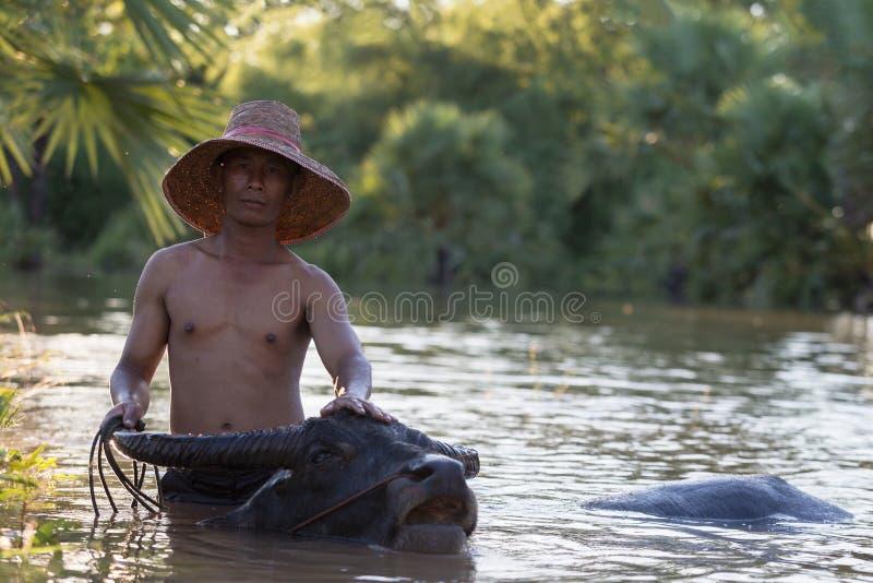 Agricoltore con il bufalo fotografia stock libera da diritti