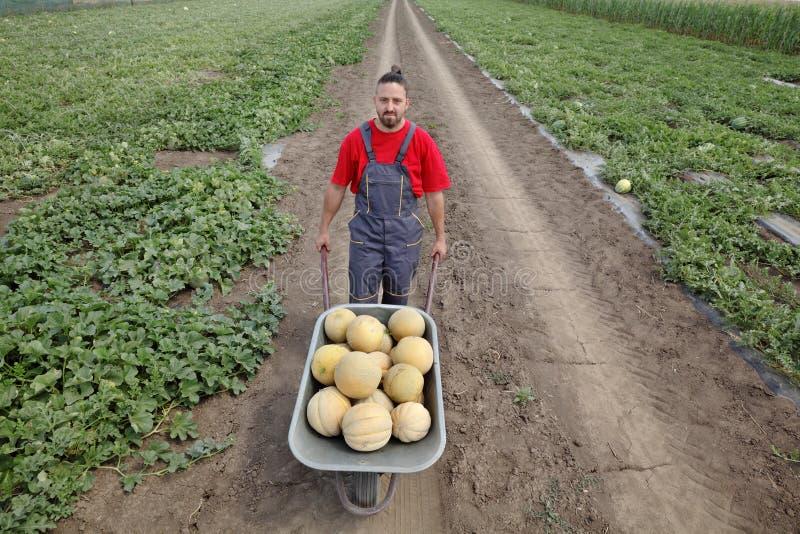 Agricoltore con il melone nel campo immagini stock
