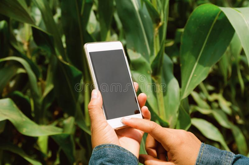 agricoltore con il telefono cellulare in mani fotografia stock