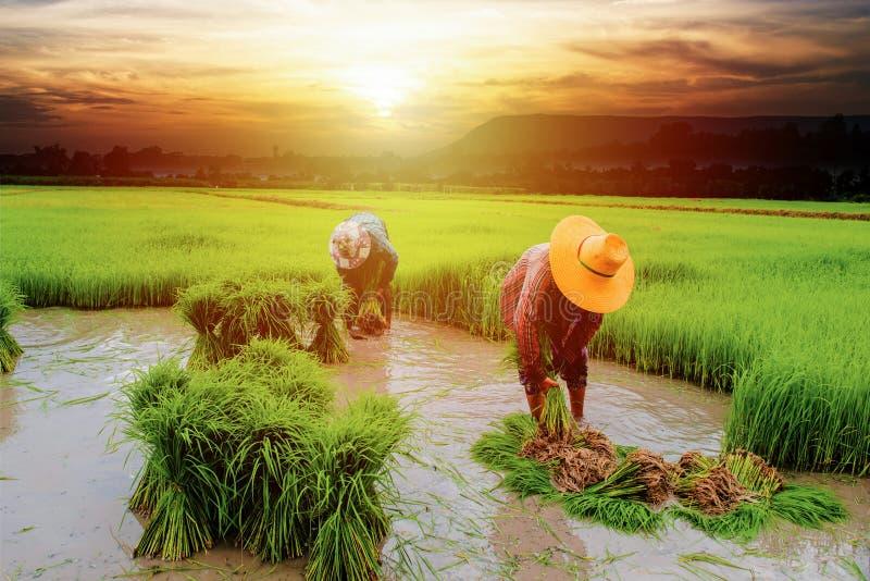 agricoltore con l'azienda agricola del paesaggio immagine stock