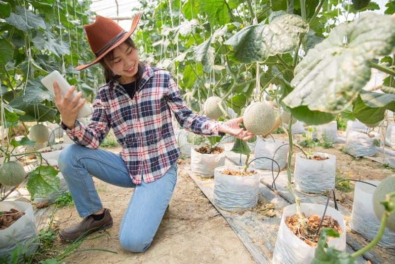 Agricoltore con la compressa per il lavoro dell'orto idroponico organico alla serra Agricoltura astuta, azienda agricola, fotografie stock libere da diritti