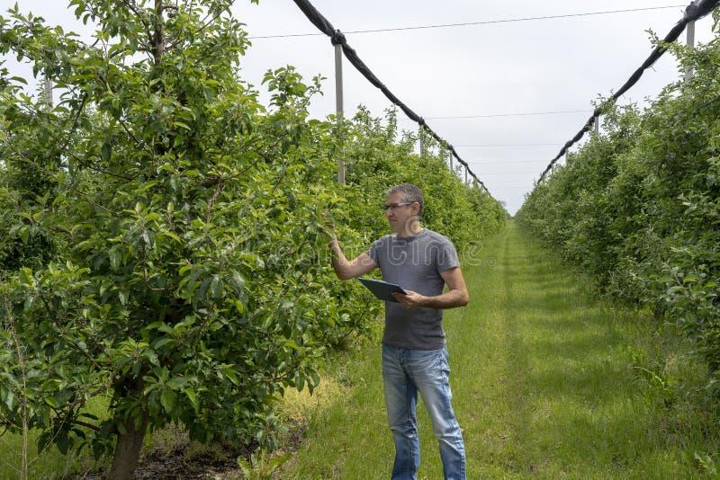 Agricoltore con la lavagna per appunti che ispeziona di melo in frutteto fotografie stock