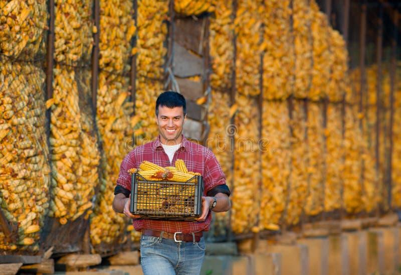 Agricoltore con le pannocchie di granturco immagine stock libera da diritti