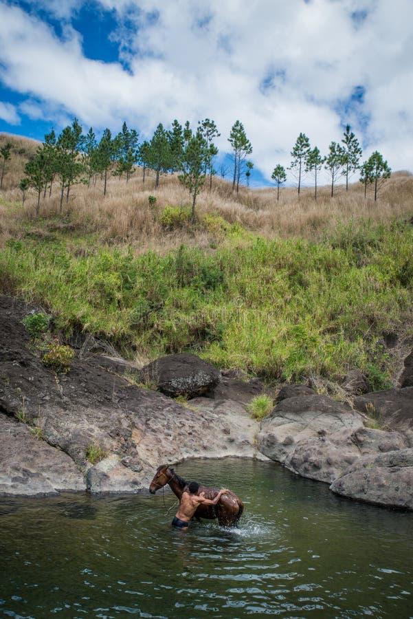 Agricoltore del Fijian che lava il suo cavallo in un fiume, Figi della campagna immagini stock libere da diritti