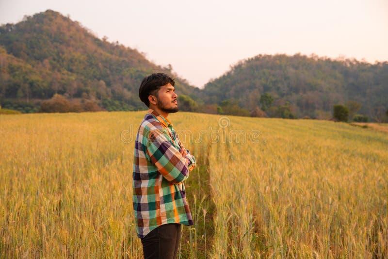 Agricoltore del giovane nella condizione della camicia di scott che guarda in un giacimento dell'oro di orzo fotografia stock libera da diritti