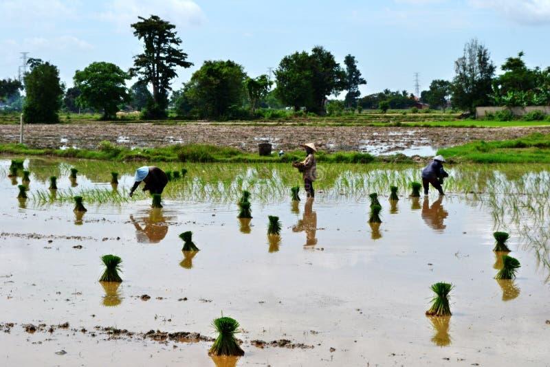 Agricoltore del Laos fotografia stock