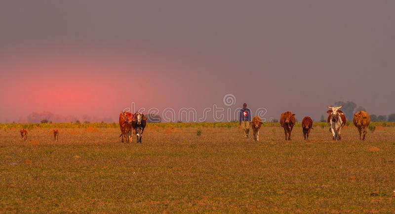 Agricoltore di sussistenza in Africa con i suoi cani e bestiame