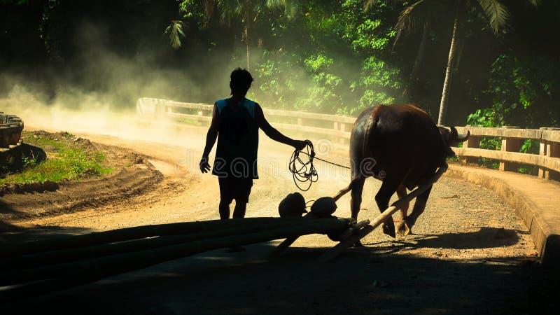 Agricoltore e bufalo d'acqua fotografia stock