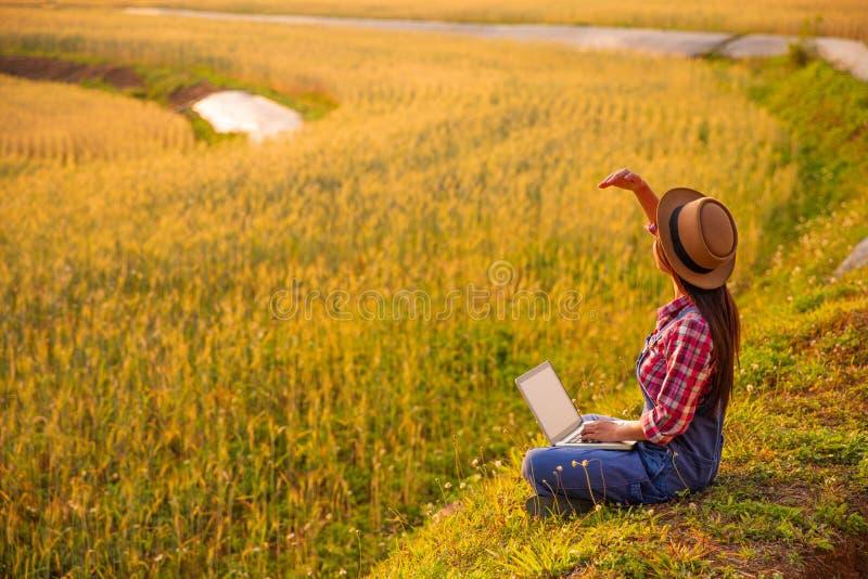 Agricoltore femminile che utilizza computer portatile nel campo del raccolto del grano dell'oro fotografia stock