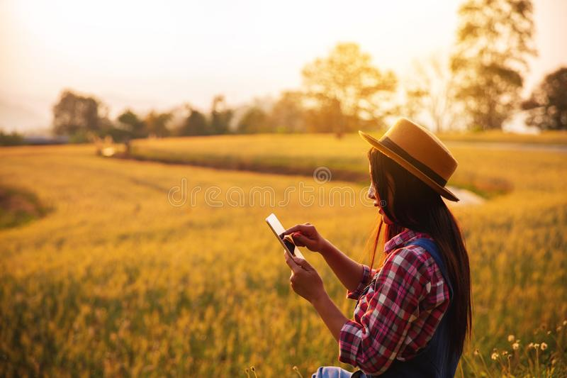 Agricoltore femminile che utilizza il computer della compressa nel campo del raccolto del grano dell'oro immagini stock