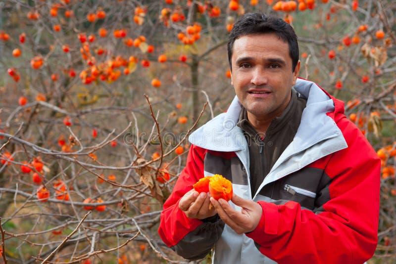 Agricoltore latino in autunno con i frutti del cachi fotografia stock libera da diritti