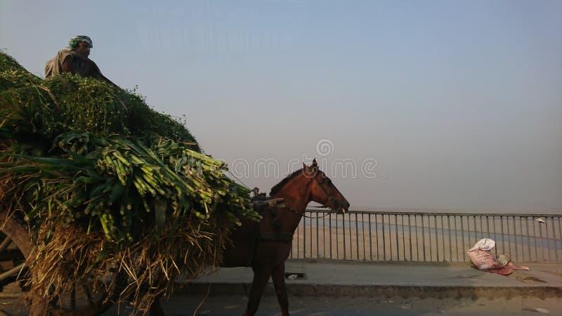 Agricoltore lavorante ed il suo cavallo immagini stock libere da diritti