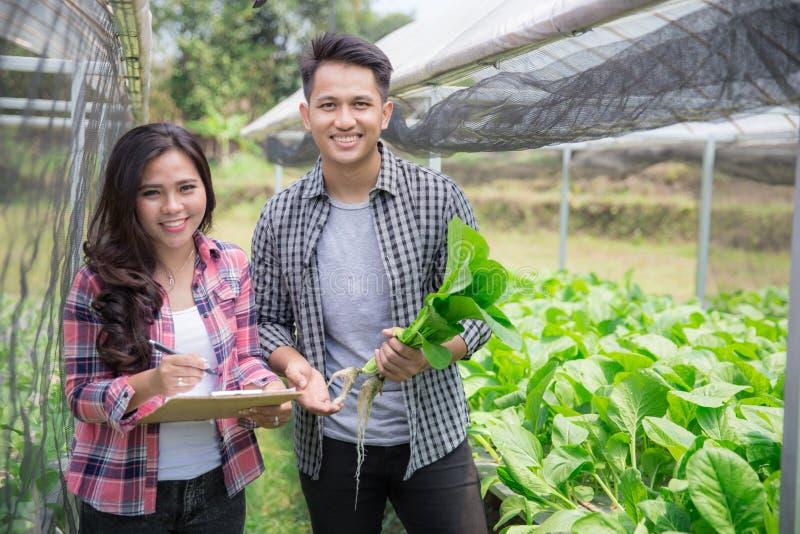 Agricoltore maschio in azienda agricola hydrophonic moderna fotografia stock libera da diritti