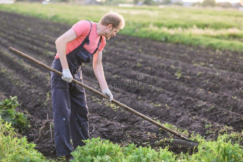 Agricoltore maschio con una sarchiatura della zappa nel campo sul tramonto fotografie stock