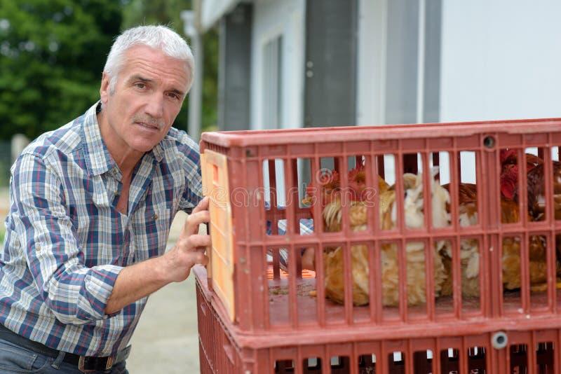 Agricoltore maturo che spinge le galline delle casse fotografie stock
