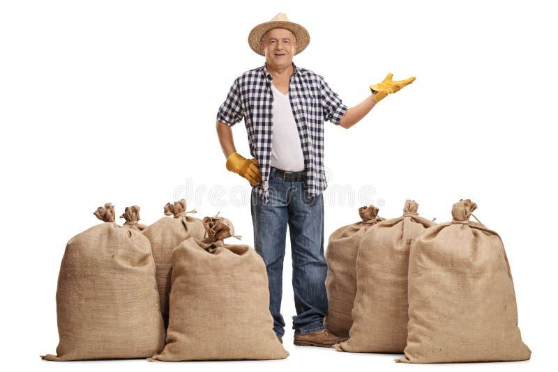 Agricoltore maturo felice che sta fra i sacchi della tela da imballaggio e gesturing fotografia stock libera da diritti