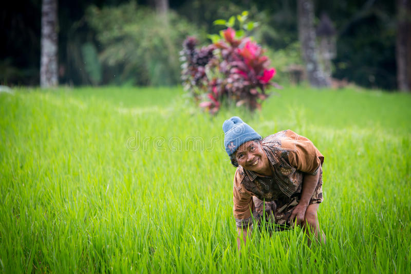 Agricoltore Near Ubud del riso in Indonesia fotografia stock