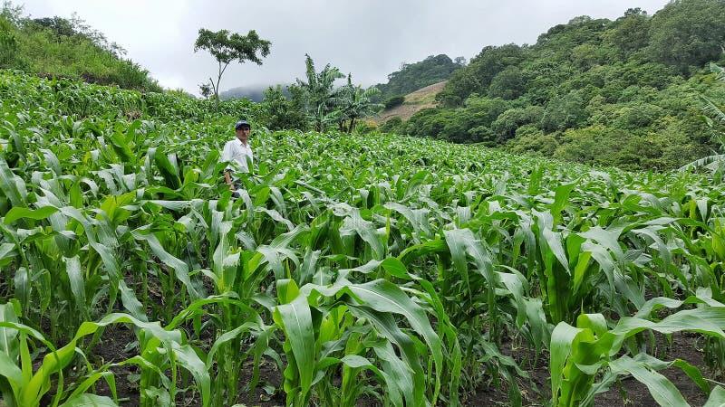 Agricoltore nella montagna immagine stock libera da diritti