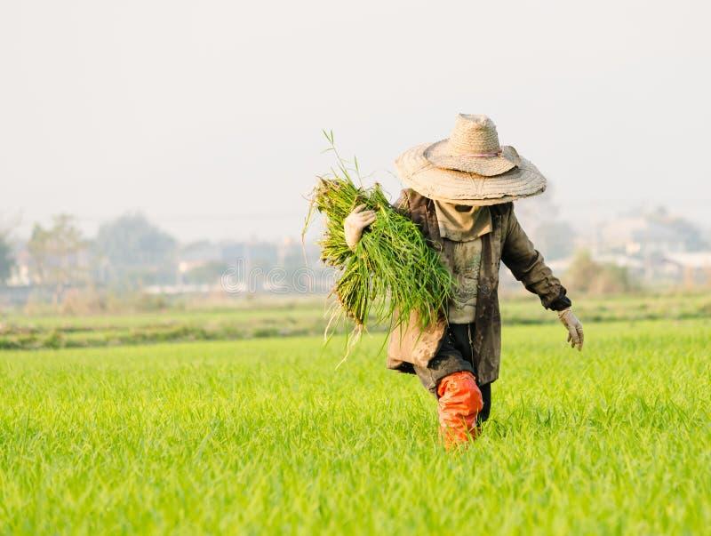 Agricoltore in porcellana immagine stock
