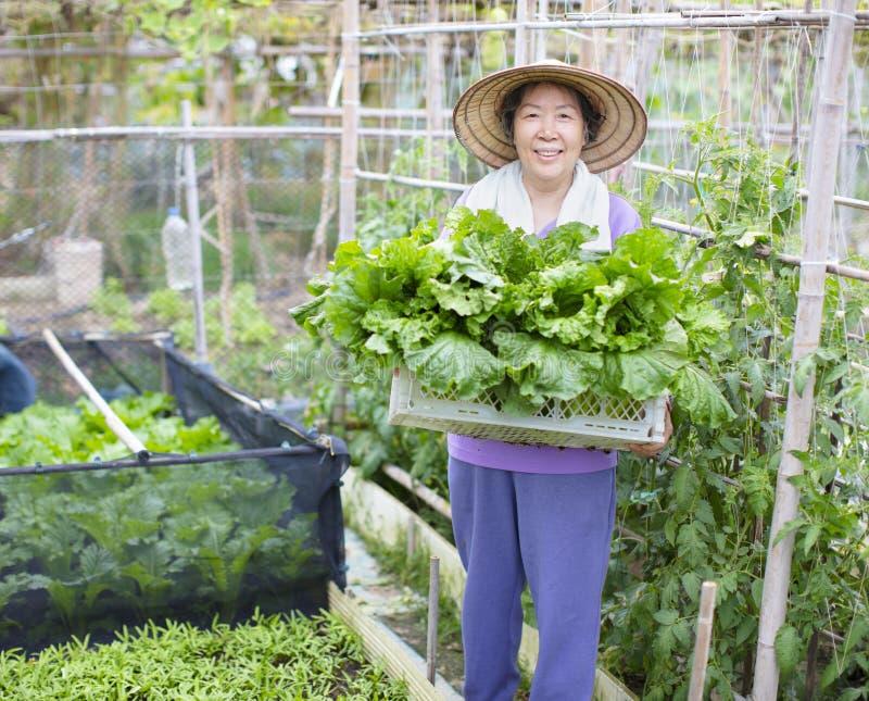 Agricoltore senior femminile con le verdure fotografie stock
