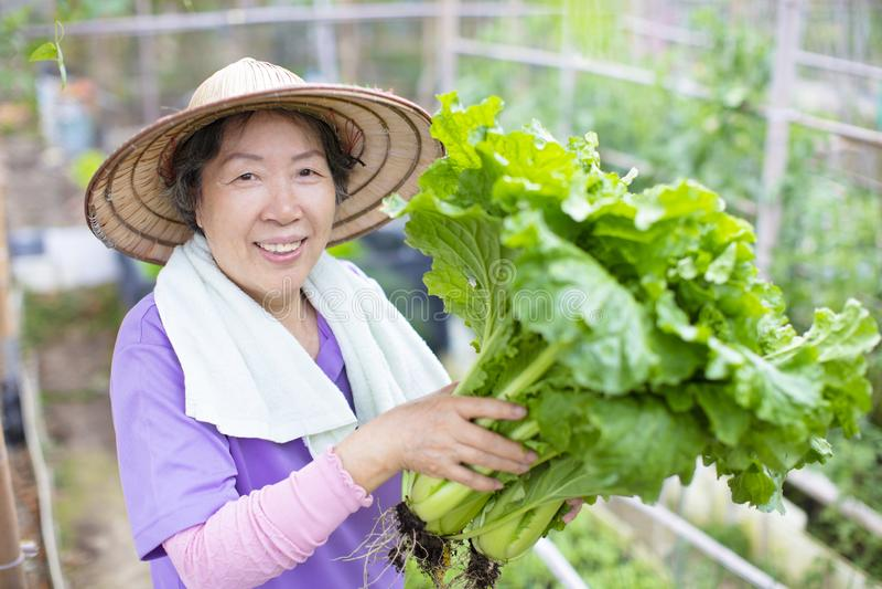 Agricoltore senior femminile con le verdure immagini stock libere da diritti