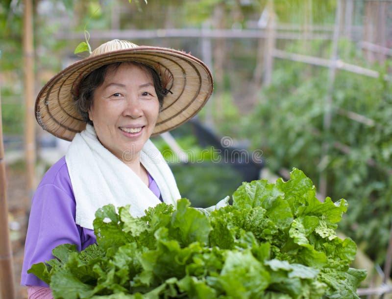 Agricoltore senior femminile con le verdure fotografia stock libera da diritti