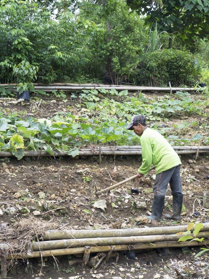 Agricoltore su un'azienda agricola in Balamban, Cebu, Filippine fotografie stock