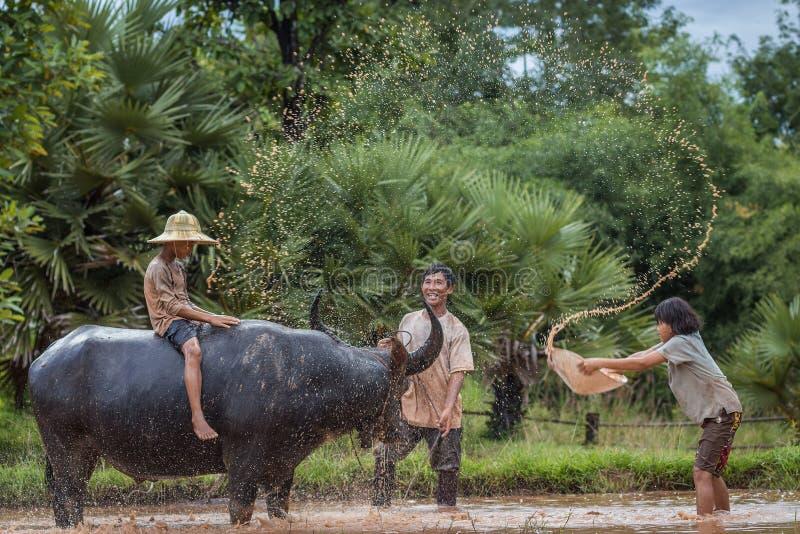 Agricoltore tailandese della famiglia con il bufalo fotografie stock libere da diritti