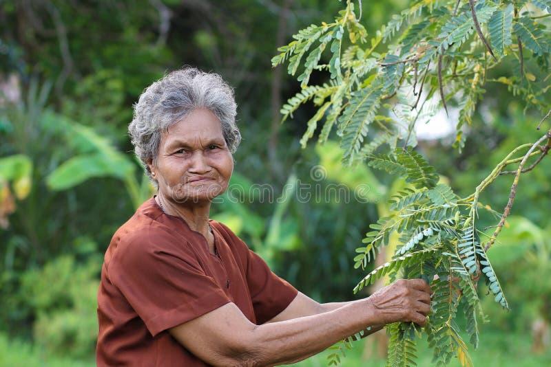 Agricoltori anziani asiatici nell'orto fotografia stock libera da diritti