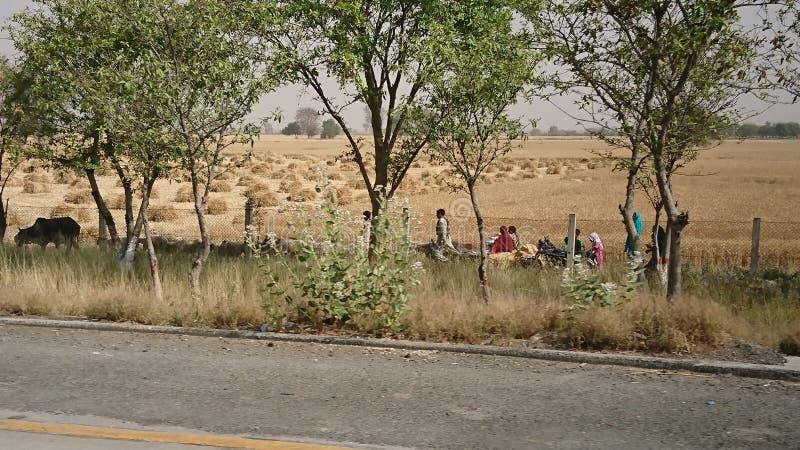 Agricoltori che lavorano vista fotografia stock libera da diritti