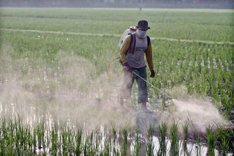 Agricoltori che spruzzano i raccolti immagini stock