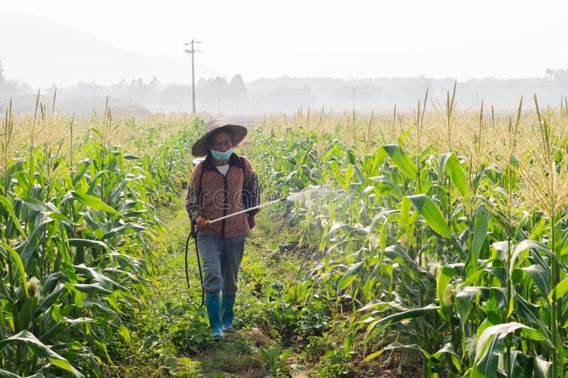 Agricoltori del cereale della Cina che spruzzano gli antiparassitari immagini stock